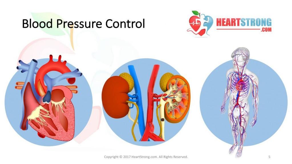 Hypertension And Heart Disease Heartstrong